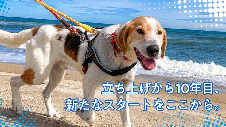 浸水被害から保護犬猫を守る。LYSTAシェルターを高台に移設したい