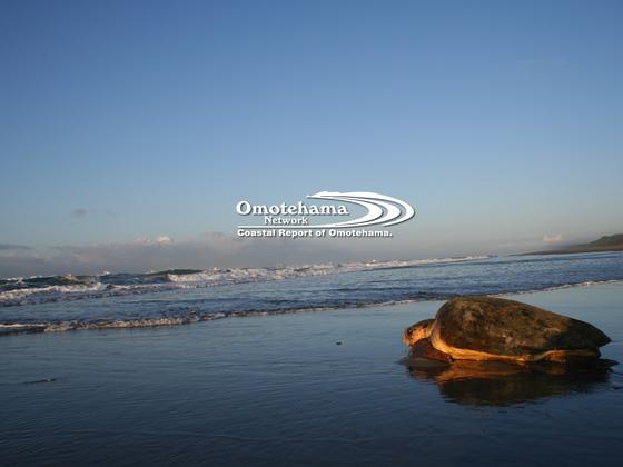 産卵に来たウミガメが最悪死に至る悲劇〜表浜海岸の今を1冊に〜