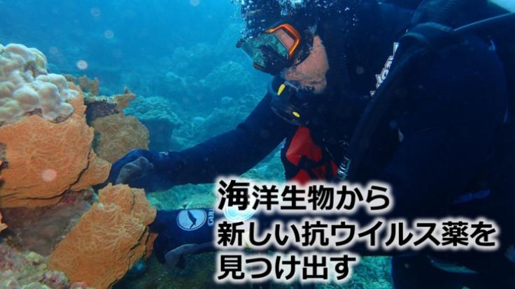 ウイルス感染症の治療薬の素となる化合物を海洋生物から見つけたい