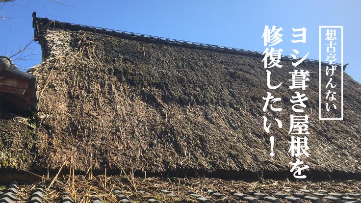 滋賀県、湖北地域の伝統建築。ヨシ葺き屋根を修復したい!