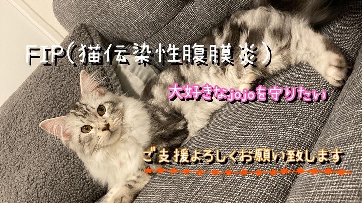 致死率99.9%FIPに感染した愛猫にご支援お願い致します。