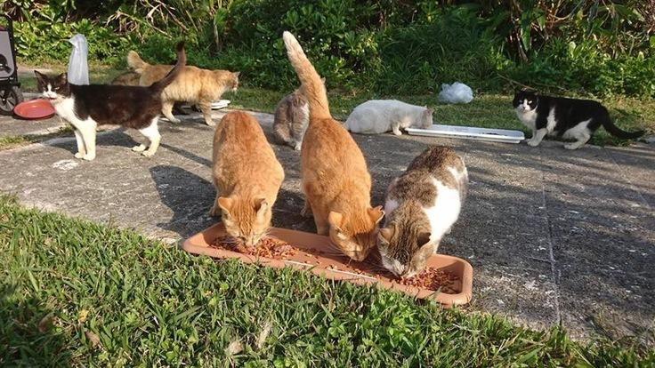 沖縄の野良猫たちに生きる権利を…