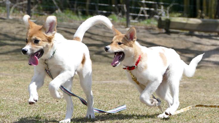 保護犬のためのドッグランを新設 新しい家族との出会いをここから。