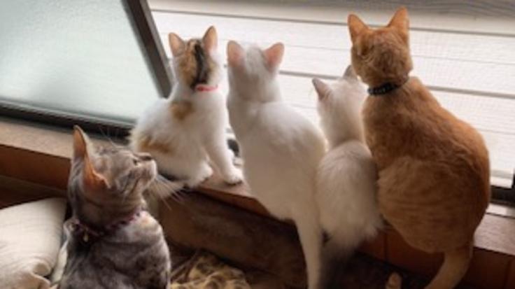 福岡に保護猫活動の支援と情報発信を行う「猫カフェ」を作りたい!