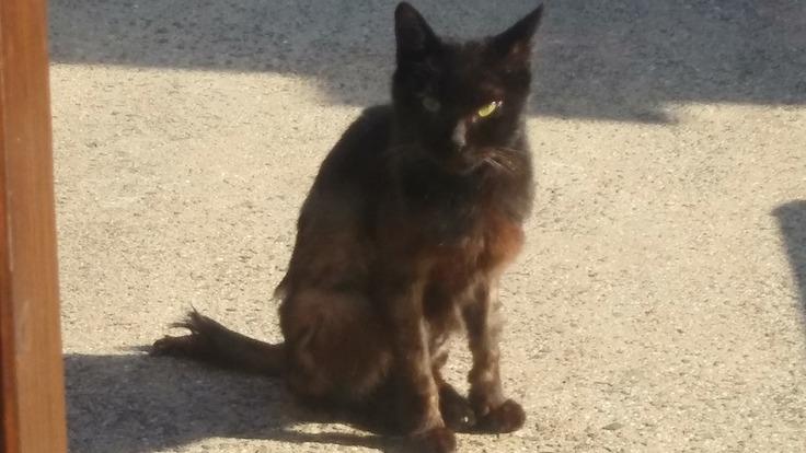 怪我をした猫を保護しました。治療費のご支援、ご協力お願い致します。