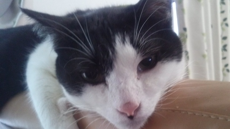 FIP(猫伝染性腹膜炎)の治療費のご支援ご協力をどうかお願いします