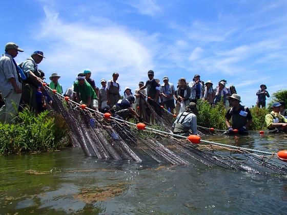 大阪の淀川に、国の天然記念物イタセンパラを再び泳がせよう!