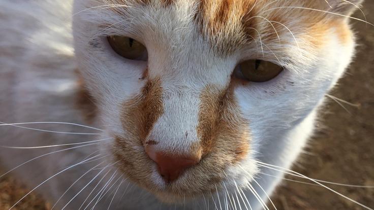 「一代限りの大切な命」として、野良猫たちの猫生を守りたい。
