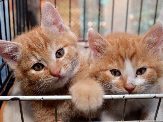 真冬には‐20度になる北海道長沼町に暖かい猫舎を建築したい!