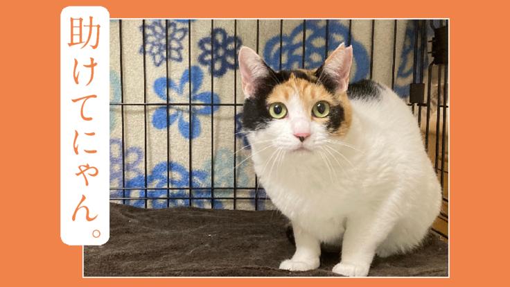 行き場を失った犬猫たちや負傷猫を助けるためのご支援をお願いします。