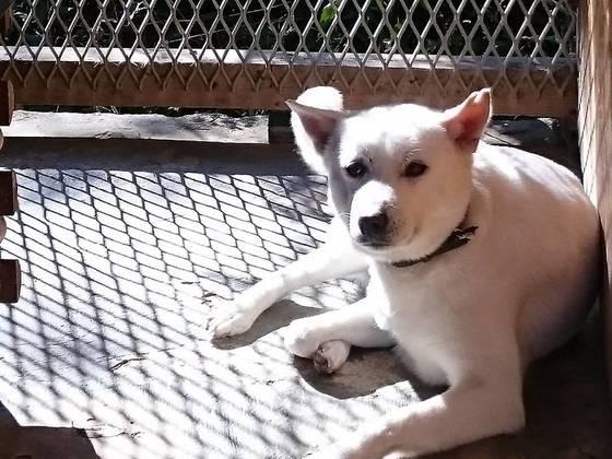 犬達が笑顔で過ごせる新しい犬舎の建設にご協力ください!