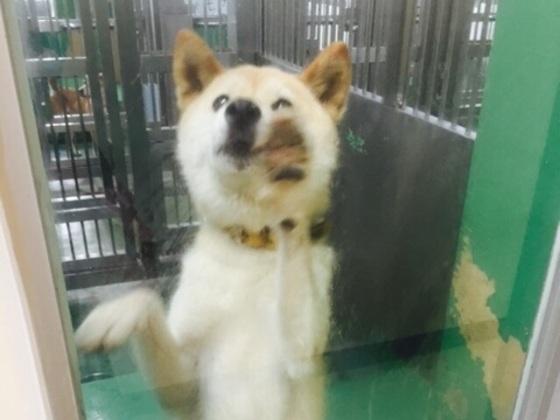 人間の都合によって捨てられた身寄りのない犬たちを救いたい!