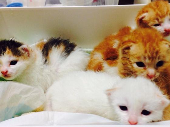 保護した猫たちに新しい家族を!シェルター兼譲渡会場を開設!