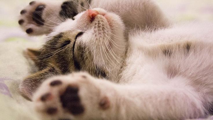 野良猫を、幸せな家庭に住まわせたい!