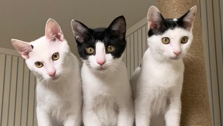 白血病の子猫に十分な治療を!