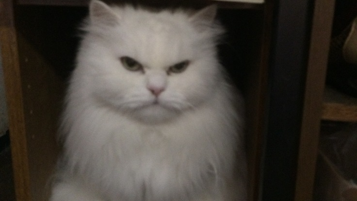 22歳の老猫モモの慢性腎不全の治療費に支援をお願いします。