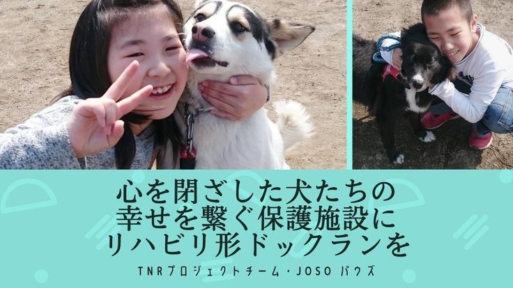 心を閉ざした犬たちの幸せを繋ぐ保護施設にリハビリ形ドックランを