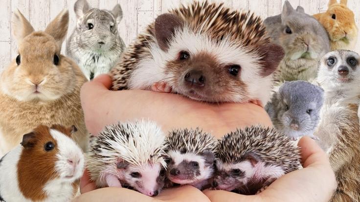 新型ウィルスに負けるな。人も動物も元気に過ごせる会社を護りたい