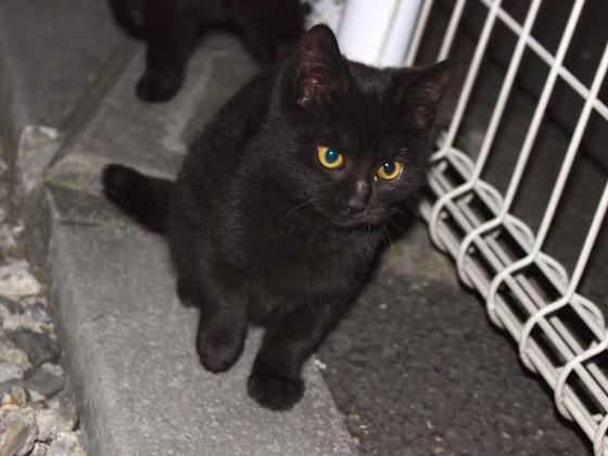 埼玉県にいる6匹の野良猫たちに安心して暮らせる場所を届けたい