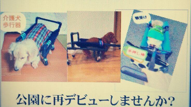 介護を必要とする【老犬、リハビリ犬】の4輪歩行器