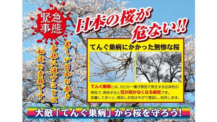 日本の桜が危ない!蔓延するてんぐ巣病被害から日本の桜を守ろう!