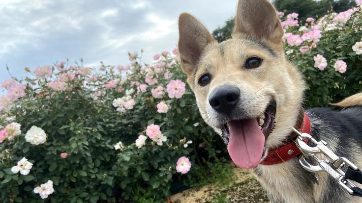 キドックス10年目の挑戦|地域に開かれた人と動物の福祉施設を新設!