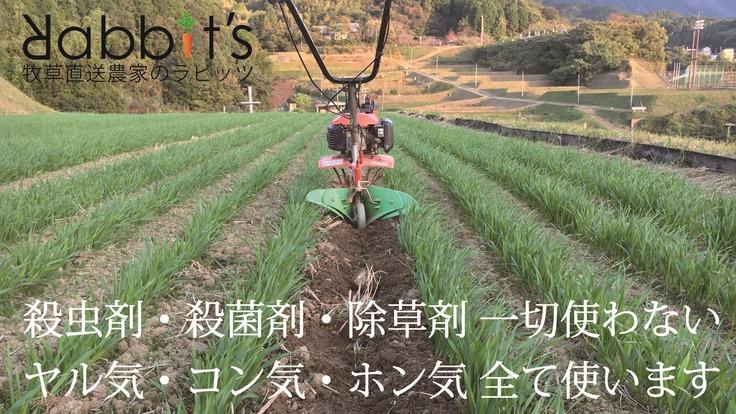 高齢・術後のうさぎの為に安心安全な無農薬牧草を安定供給してあげたい