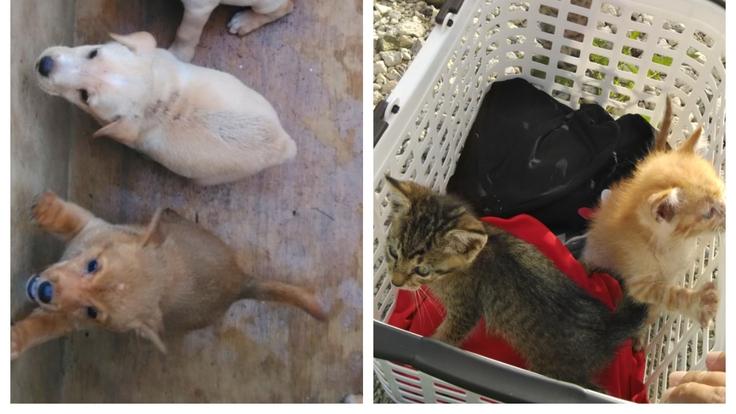 沖縄やんばるの傷病犬、猫のレスキュー活動とTNR、動物愛護の啓蒙