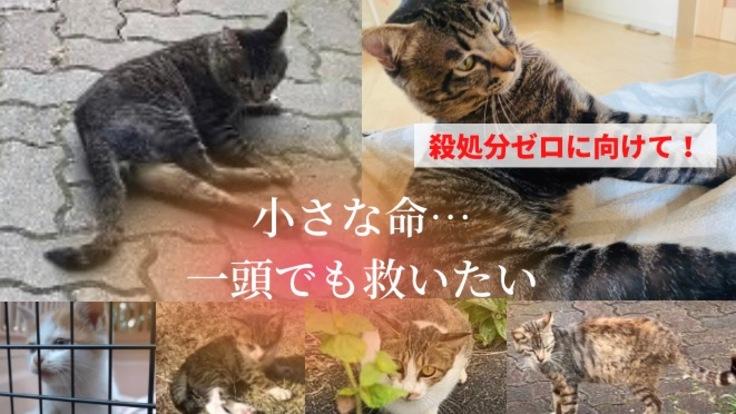 外猫、足が麻痺した保護猫を育てる日々に応援をお願いします。