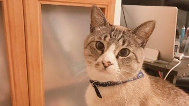 【拘束型心筋症】末期の猫を救いたい!治療費・薬のご支援お願いします
