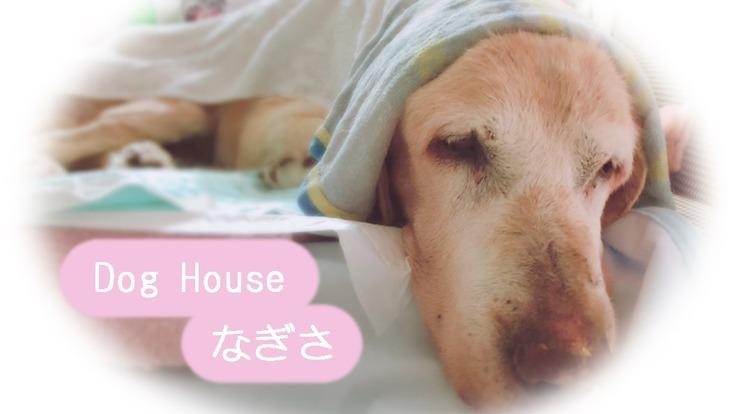 福岡県に老犬ホーム複合施設のオープンに向けて応援お願いします