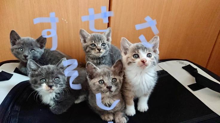 野良猫の過酷な現状と保護の限界!息子と野良猫0匹を目指しての挑戦!