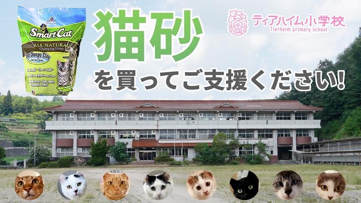 猫砂やグッズを買って保護ねこ施設をご支援ください!