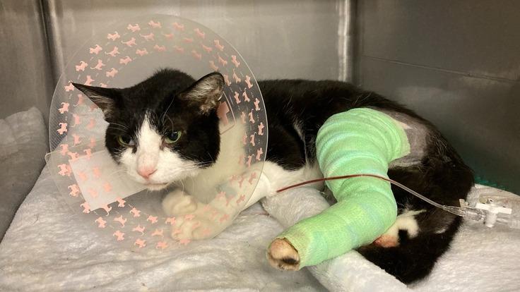 保護猫くーちゃんが又走れるようにご支援をお願いいたします。