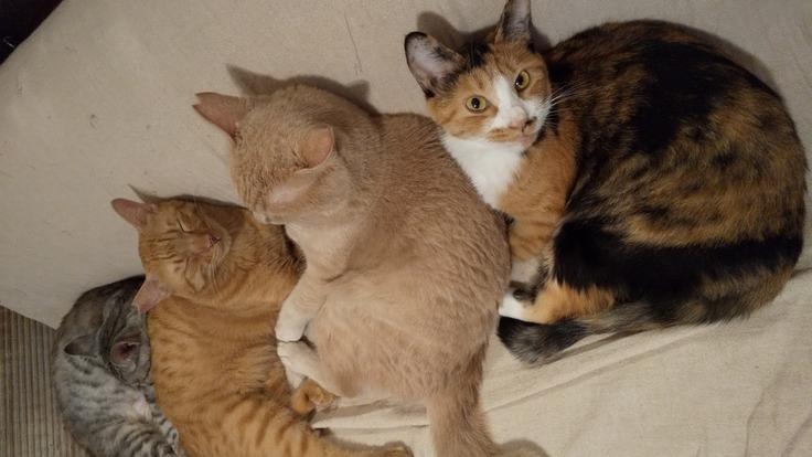 これから購入する中古住宅に猫のシェルターを併設したい!