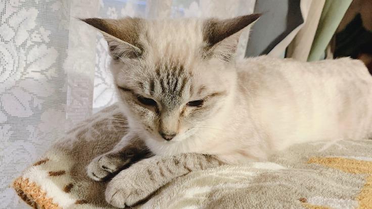 余命宣告を受けた2匹めの猫を助けたい