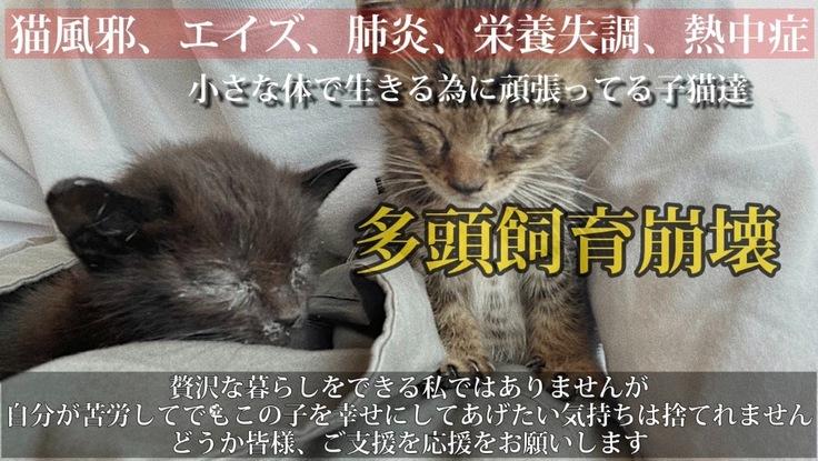 小さな子猫の命を助けたい