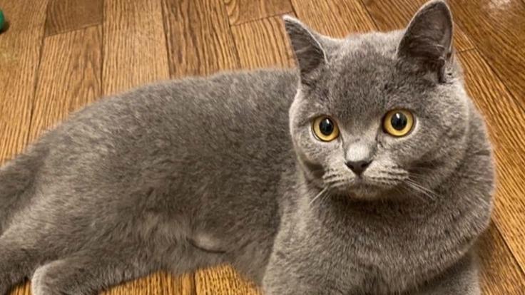 【猫伝染性腹膜炎(FIP)闘病中】ちゃるめへの治療費ご支援のお願い