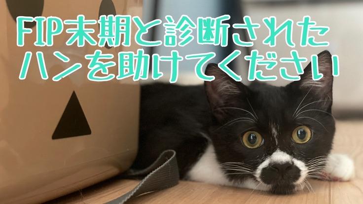 生後4か月でFIPと診断された愛猫ハンを救いたい