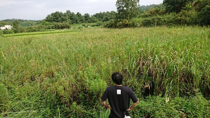 耕作放棄地を活用し地球や社会に貢献!『第1弾・本気でバナナ栽培』