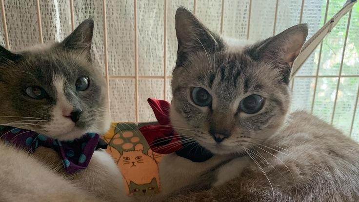FIP(猫伝染性腹膜炎)治療の為、小さな家族を助けて下さい!