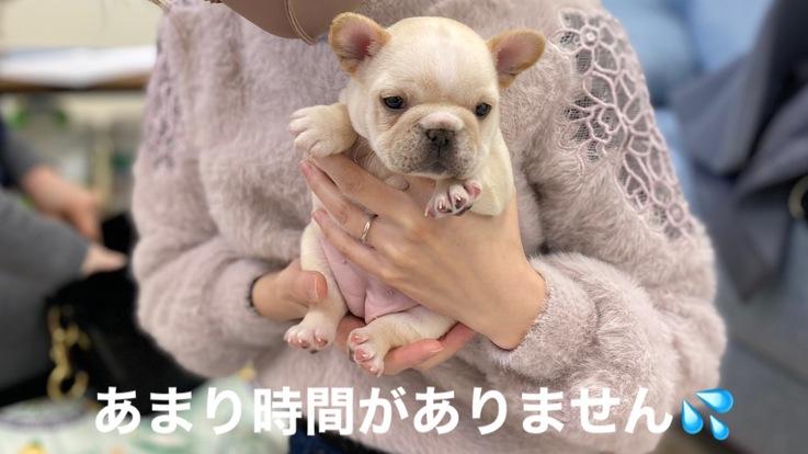 重度心臓病の愛犬『おもち』の手術費用のご支援をお願いします