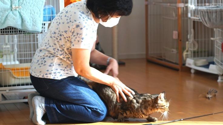 保護猫活動、シェルター運営費用サポートのお願い