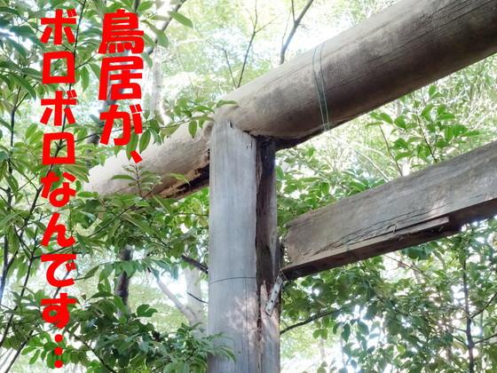 【浜松市】 縣居(あがたい)神社の鳥居を建て直したい!