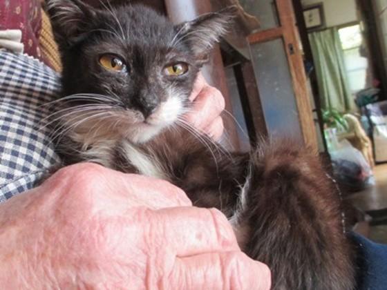 86歳のおばあちゃんからのSOS!23匹の猫を助けたい!