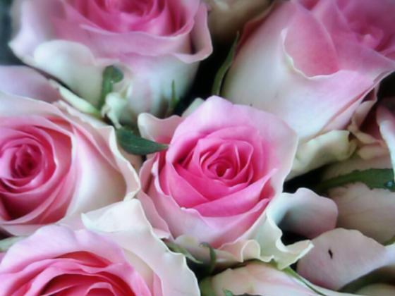 格安でお花を届けるサービスをつくりたい!