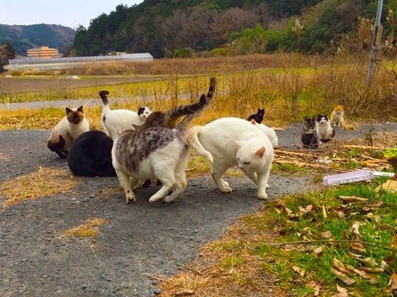 愛知県 東三河の悲惨な「猫捨て場」の猫たちを救いたい!