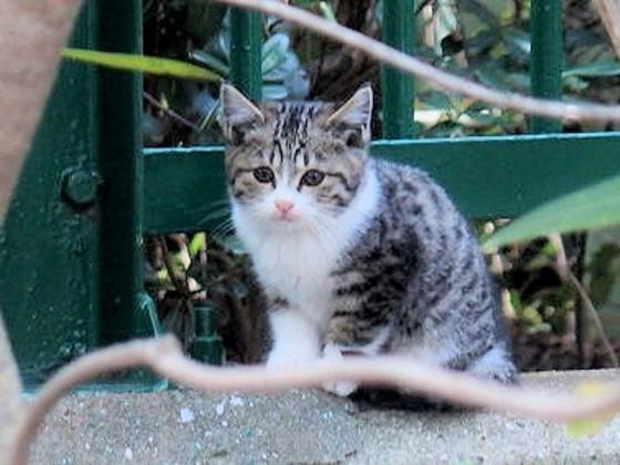 3000匹の猫が殺処分される兵庫県で「保護猫カフェ」を作りたい!
