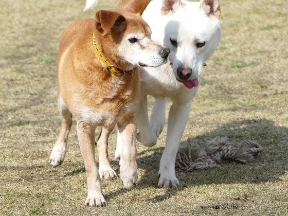 ドッグランを改修して、飼い主のいない犬の生活に幸せを!
