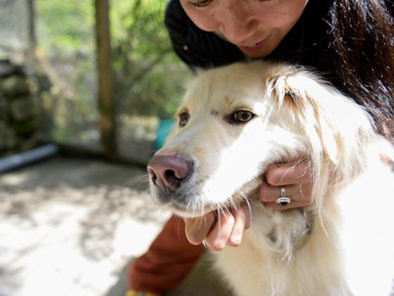日本最大級!保護団体の動物情報を1つに集約したサイトを制作!